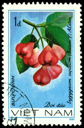 viet nam: VIET NAM- CIRCA 1981  a stamp printed in Viet nam shows image  The Fruits Suzugium  aqueum  L, series, circa 1981