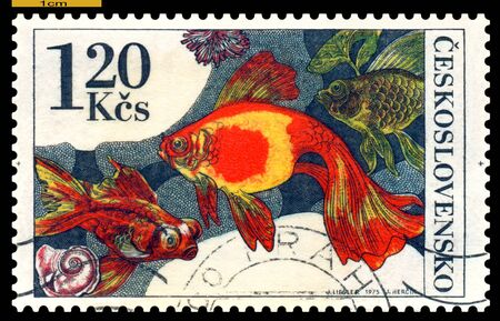 CZECHOSLOVAKIA - CIRCA 1975: a stamp printed by Czechoslovakia  show Aquarium  Fish Carassius auratus, circa 1975 Stock Photo - 16513624