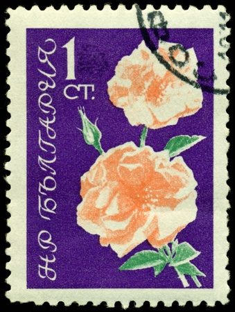 Bulgaria - CIRCA 1962: a stamp printed in Bulgaria shows  flowers  the rose, circa 1962 photo