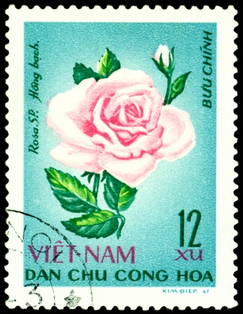 Vietnam- CIRCA 1967: a stamp printed in Vietnam shows image of a Rose with the inscription Hong , series, circa 1967 photo