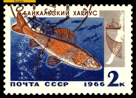 RUSSIA - CIRCA 1966: a stamp printed by Russia show the fish  Baikal grayling.  circa 1966 Stock Photo - 19257236