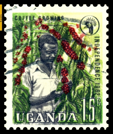 UGANDA - CIRCA 1962  A stamp printed in Uganda  shows Picker coffee  1962   photo