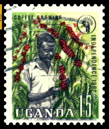 UGANDA - CIRCA 1962  A stamp printed in Uganda  shows Picker coffee  1962