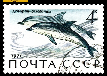 RUSSIA - CIRCA 1971: a stamp printed by Russia shows Common Delphins,  Sea  Mammals,  circa 1971 Stock Photo - 19886837