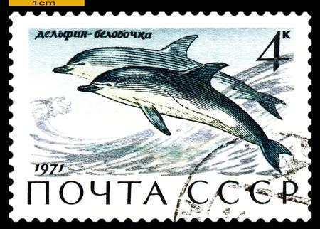RUSSIA - CIRCA 1971: a stamp printed by Russia shows Common Delphins,  Sea  Mammals,  circa 1971 Stock Photo - 19886837
