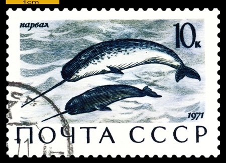 RUSSIA - CIRCA 1971: a stamp printed by Russia shows Narwhals,  Sea  Mammals,  circa 1971 Stock Photo - 19886838