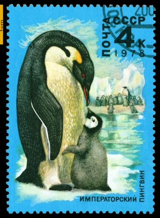 RUSSIA - CIRCA 1978: a stamp printed by Russia shows  Emperor penguin and chick,  Antarctic Fauna,  circa 1978 Stock Photo - 20197331