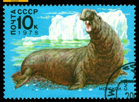 RUSSIA - CIRCA 1978: a stamp printed by Russia shows  Sea  Elephant,  Antarctic Fauna,  circa 1978 Banco de Imagens