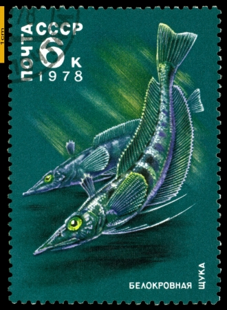 """RUSSIA - CIRCA 1978: a stamp printed by Russia, show the fishes with the inscription """" White - biooded pices"""", series, circa 1978 Stock Photo - 20197339"""