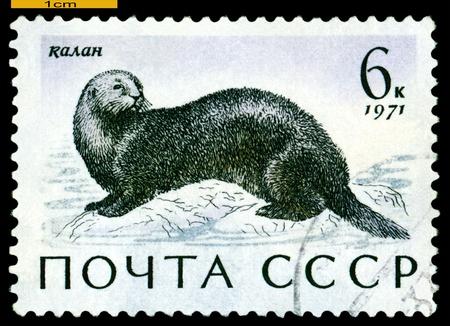 sea otter: RUSSIA - CIRCA 1971: a stamp printed by Russia shows Sea otter,  Sea  Mammals,  circa 1971 Editorial
