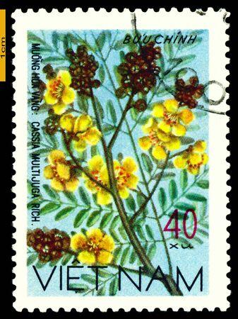 philatelic: VIETNAM- CIRCA 1977: a stamp printed in Vietnam shows image  Cassia Multijuga, series, circa 1977