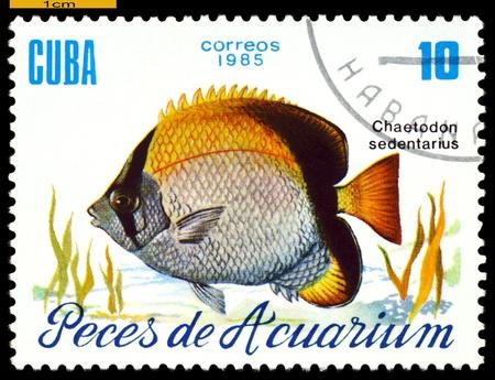 "CUBA - CIRCA 1985  a stamp printed by Cuba  show the fish with the inscription  ""Chaetodon sedentarius"",  circa 1985 Stock Photo - 21928035"