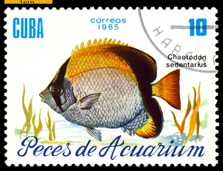 "CUBA - CIRCA 1985  a stamp printed by Cuba  show the fish with the inscription  ""Chaetodon sedentarius"",  circa 1985 Stock Photo - 21928035"