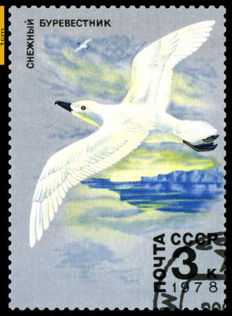 antarctic: RUSSIA - CIRCA 1978  a stamp printed by Russia shows   Whitewinged Petrel,  Antarctic Fauna,  circa 1978