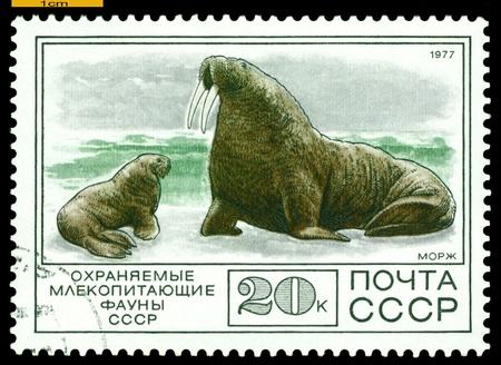 러시아 -1977 년경 : A 우표 시트 러시아에서 인쇄 스톡 콘텐츠