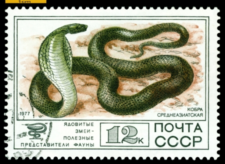 RUSSIA - CIRCA 1977: A Stamp sheet printed in Russia  shows   Central Asian Cobra,  collection of Protected Fauna of the USSR, Poisonous Snakes, series, circa 1977    photo