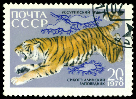 RUSSIA - CIRCA 1970: A Stamp sheet printed in Russia  shows  Ussurian Tiger ,  Annimals from Sikhote-Alin Reserve, series, circa 1970