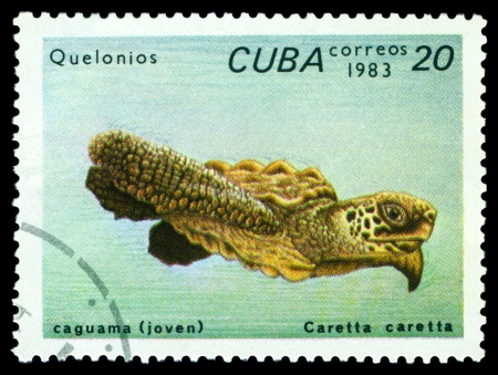 terrapin: CUBA - CIRCA 1983 un timbro stampato da Cuba mostra tartaruga Caretta caretta, tartarughe serie, circa 1983
