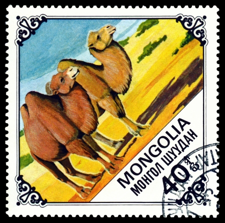 camel post:  MONGOLIA - CIRCA 1978: A Postage Stamp Printed in the Mongolia Shows Two Camels, series Bactrian Camels, circa 1978  Editorial