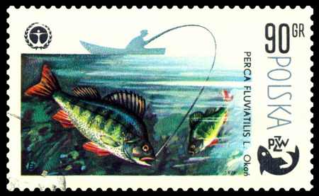 POLAND - CIRCA 1979  A stamp printed in Poland, shows  Perch, from the series Centenary of Polish Angling, circa 1979 Stock Photo - 24220190