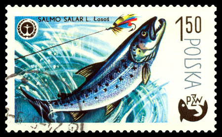 POLAND - CIRCA 1979  A stamp printed in Poland, shows  fish  Salmon, from the series Centenary of Polish Angling, circa 1979 Stock Photo - 24220781