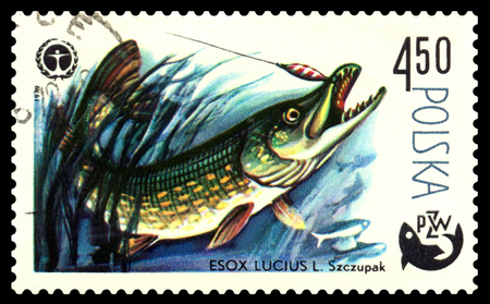 POLAND - CIRCA 1979  A stamp printed in Poland, shows  fish  Pike, from the series Centenary of Polish Angling, circa 1979 Stock Photo - 24239715