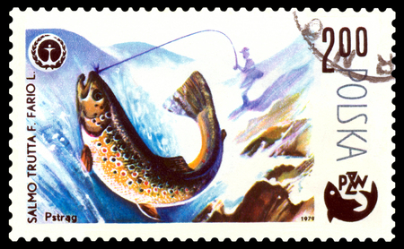 POLAND - CIRCA 1979  A stamp printed in Poland, shows  fish  Trout, from the series Centenary of Polish Angling, circa 1979 Stock Photo - 24239758