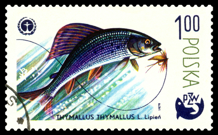 POLAND - CIRCA 1979  A stamp printed in Poland, shows  fish  Grayling, from the series Centenary of Polish Angling, circa 1979 Stock Photo - 24240043