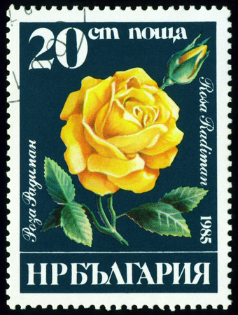 Bulgaria - CIRCA 1985  a stamp printed in Bulgaria shows  flowers  the rose sort Rosa Radiman, circa 1985 photo