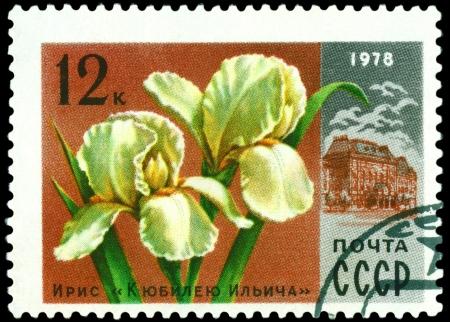 Russia - CIRCA 1978  a stamp printed in Russia shows  Iris � Ilich anniversary �, series  Moscov  Flowers, circa 1978