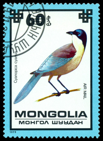 MONGOLIA - CIRCA 1979   A stamp printed by Mongolia shows bird an Blue magpie from the series Protected Birds, circa 1979