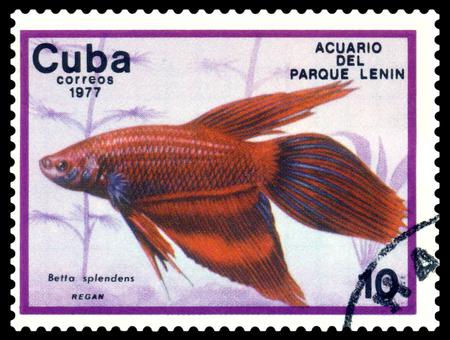 CUBA - CIRCA 1977  a stamp printed by Cuba  show the fishes with the inscription   Betta splendens, Lenin Park Aquarium, Havana   Series, circa 1977 Stock Photo - 26022510