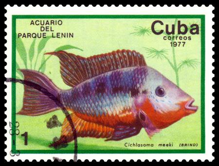 CUBA - CIRCA 1977  a stamp printed by Cuba  show the fishes with the inscription  Chichlasoma meeki, Lenin Park Aquarium, Havana   Series, circa 1977 Stock Photo - 26022511