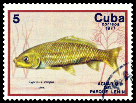 CUBA - CIRCA 1977  a stamp printed by Cuba  show the fishes with the inscription  Cyprinus carpio, Lenin Park Aquarium, Havana   Series, circa 1977 Stock Photo - 26022512