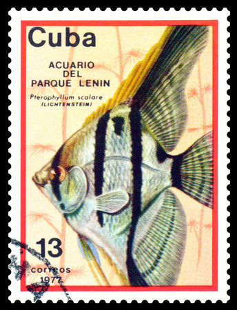 scalare: CUBA - CIRCA 1977  a stamp printed by Cuba  show the fishes with the inscription  Pterophyllum scalare, Lenin Park Aquarium, Havana   Series, circa 1977