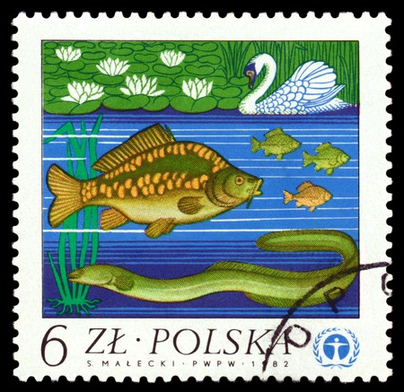 ichthyology: POLAND - CIRCA 1982  A stamp printed in Poland, shows  The Eel, carp and swan, circa 1982 Stock Photo