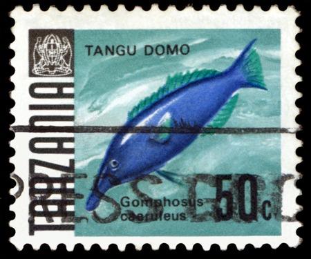 lenin: TANZANIA - CIRCA 1967  a stamp printed by Tanzania  show the fishes Gomphosus caerulrus, Lenin Park Aquarium, Havana   Series, circa 1967
