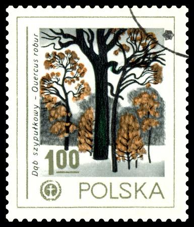 english oak: POLAND - CIRCA 1978  a stamp printed in Poland shows  English Oak, Human Environment Emblem, circa 1978