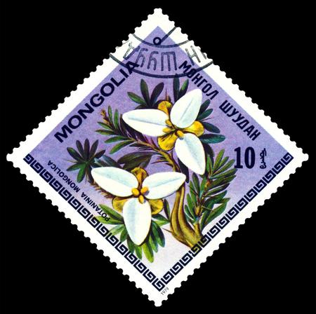 Mongolia - CIRCA 1979: a stamp printed in Mongolia shows image flowerses Potaninia Mongolica, series, circa 1979
