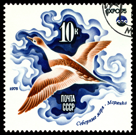 pices: RUSSIA - CIRCA 1975: a stamp printed by Russia, show Sea duck, Arctic Sea, series, circa 1975