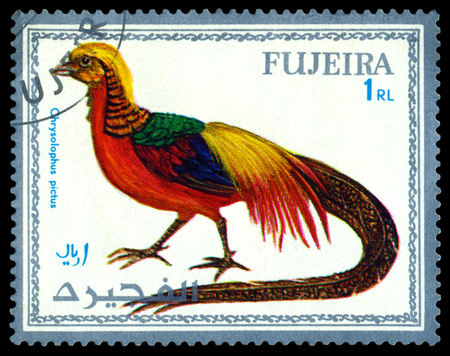 fujeira: FUJEIRA - CIRCA 1972 : A stamp printed by Fujeira  shows bird an Chrysolophus pictus,  from the series exotic bird , circa 1972.