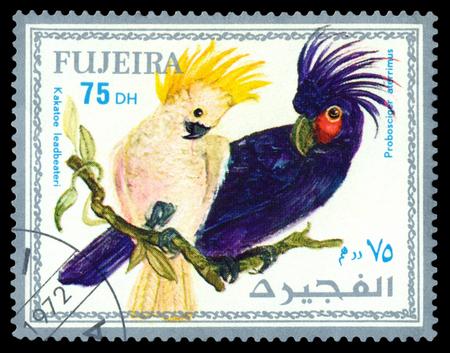 FUJEIRA - CIRCA 1972 : A stamp printed by Fujeira  shows bird an Probosciger ateerrimus,  from the series exotic bird , circa 1972.