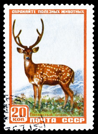 axis deer: RUSSIA - CIRCA 1957: A Stamp sheet printed in Russia  shows  Axis Deer. Series, Protect useful animals, circa 1957