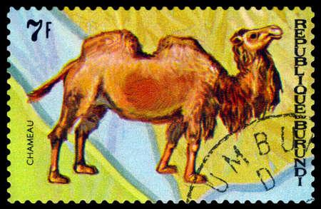 camel post: BURUNDI - CIRCA 1970 : A stamp printed by Burundi shows Animals Burundi,  camel Chameau, map Burundi, circa 1970.