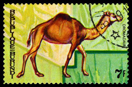 camel post: BURUNDI - CIRCA 1970 : A stamp printed by Burundi shows Animals Burundi,  camel Dromadaire, map Burundi, circa 1970. Editorial