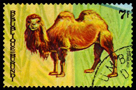 camel post: BURUNDI - CIRCA 1970 : A stamp printed by Burundi shows Animals Burundi, camel Chamenau, map Burundi, circa 1970.