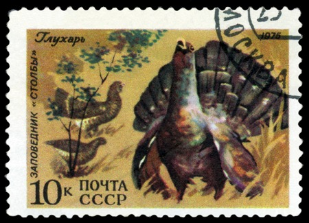squaw: RUSSIA - CIRCA 1975: A stamp printed by Russia shows bird an Old Squaw  from the series Berezina River and Stolby wildlife rezervations, 50th anniversary., circa 1975