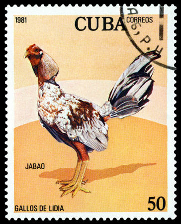 CUBA - CIRCA 1981:  A stamp printed in  GDR  shows  Blanco  Cockerel, series Fighting Cocks, circa 1981.