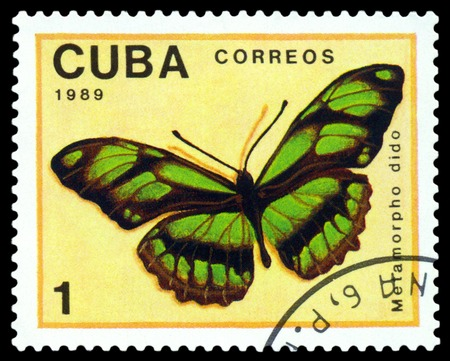 dido: CUBA - CIRCA 1989: A stamp printed in Cuba shows butterfly  Metamorpho Dido, series Butterflies, circa 1989. Stock Photo