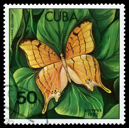 cuba butterfly: CUBA - CIRCA 1982: A stamp printed in Cuba shows butterfly  Marpesia eleuchea, series Butterflies, circa 1982.